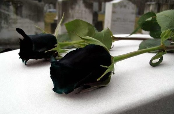 американка блъсна и уби българка