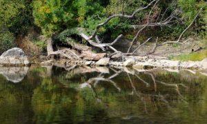 В България вече няма живи реки